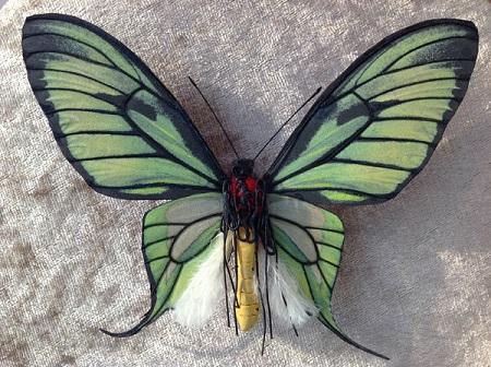 Ornithoptera_paradisea2.JPG