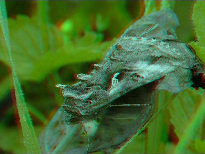 metallovidka_gamma.jpg