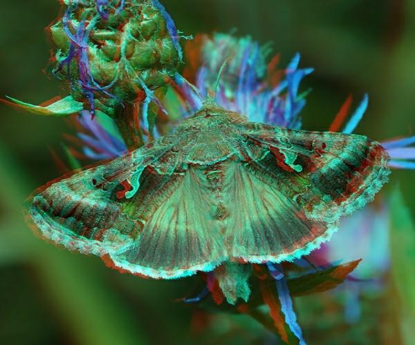 metallovidka_gamma6.jpg