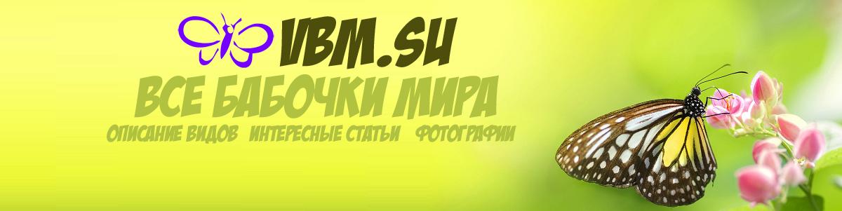 vbm.su