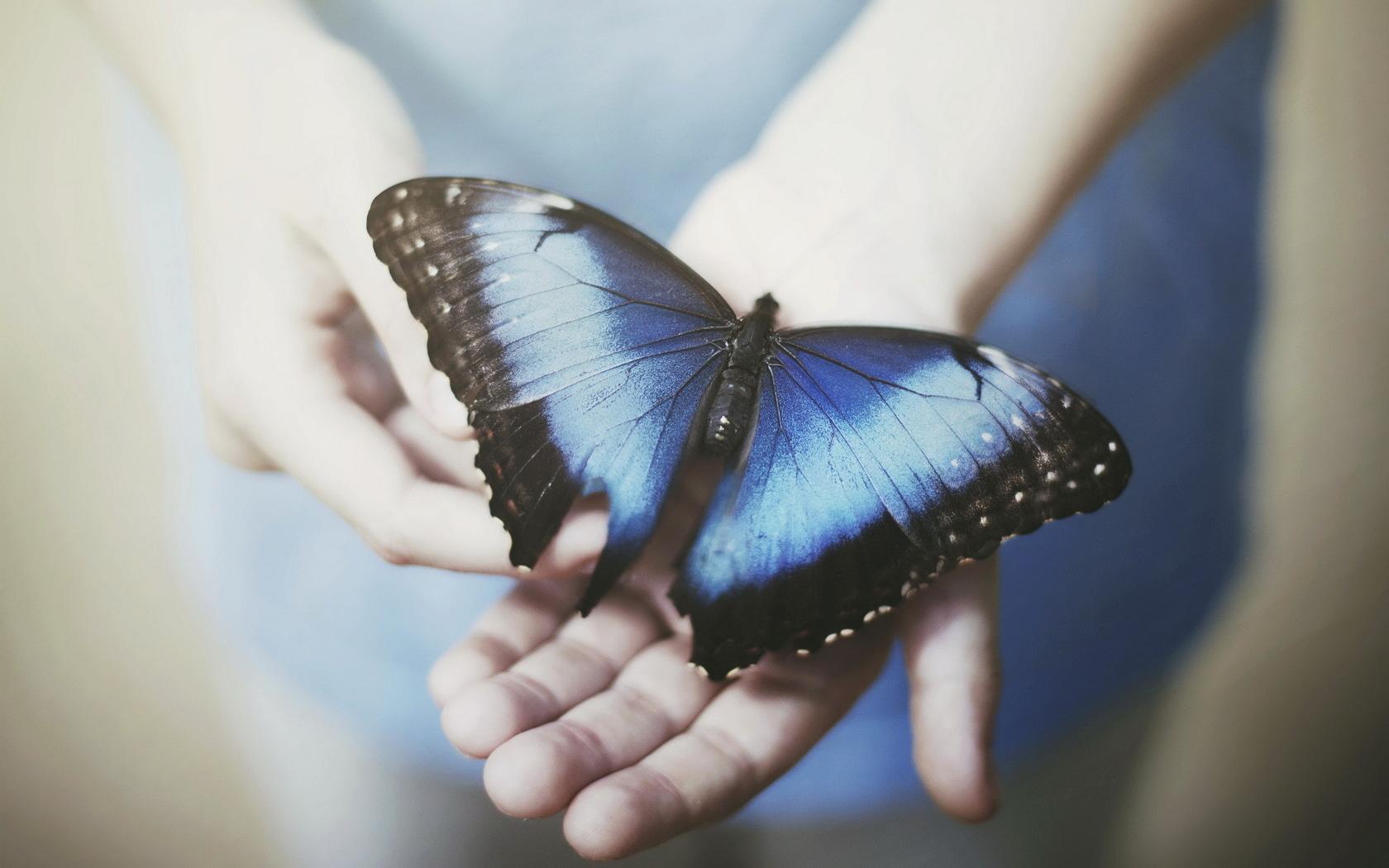 VBM.SU Все бабочки мира